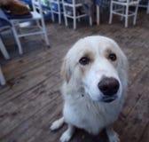 Doggy на ресторане Стоковая Фотография RF