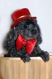 doggy одевает вверх Стоковое Изображение
