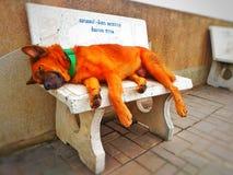doggy счастливый Стоковые Фото