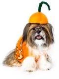 Doggy тыквы Стоковые Изображения
