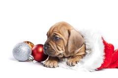 doggy украшения рождества милый Стоковое фото RF