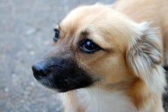 Doggy immagine stock libera da diritti