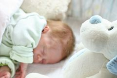 Doggy. White doggy looking up for newborn baby sleeping Stock Photography