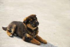 Doggy Imagem de Stock