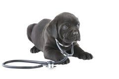 doggy Стоковое фото RF