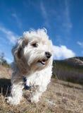 Doggy Fotografie Stock Libere da Diritti