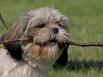 Doggy Royalty Free Stock Image