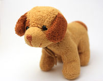 Doggy. The isolated brown and beige doggy Stock Photos