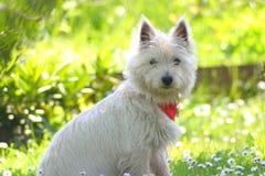 Doggy Fotografia Stock
