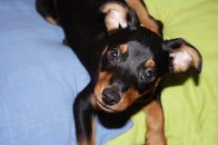 Doggy Stock Photo