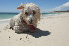 Doggy Beach Stock Photography