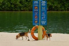 Doggy on the beach Stock Photos