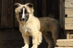 Doggy blisko stajni Obraz Royalty Free