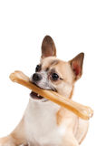 Doggy with bone Stock Photo