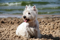Doggy bonito imagem de stock