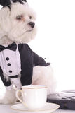 Doggy Business Stock Photo