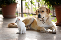 Doggy and cat Stock Image