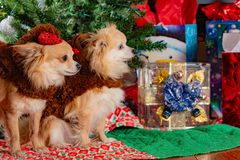 Doggy Christmas party stock images