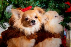 Doggy Christmas party royalty free stock image
