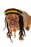 Doggy de Rasta Imagens de Stock Royalty Free
