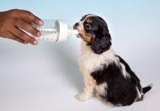 Doggy do bebê Imagem de Stock Royalty Free