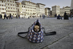 Doggy in dog bag. On the square Santa Maria Novella in the centre of Florence Italy. Dog bag is very helpful for those cute small dogs Stock Photo
