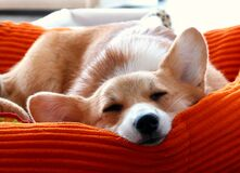 Doggy dreams Stock Photography