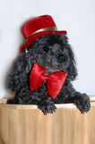 Doggy Dress Up Stock Image