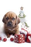 Doggy e decorazione svegli di natale immagini stock libere da diritti