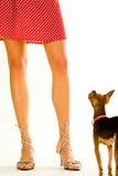 Doggy ed il suo proprietario immagine stock libera da diritti