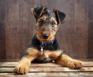 Doggy em uma caixa Foto de Stock Royalty Free