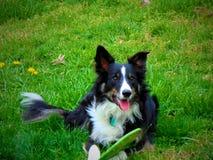 Doggy felice Immagini Stock Libere da Diritti
