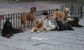 Doggy Friends. Dogs in Buenos Aires park Royalty Free Stock Photos