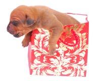 Doggy gift stock image