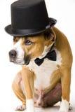 Doggy groom Stock Photo