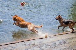 Doggy Heaven stock photography