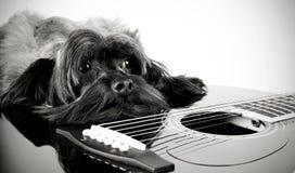 Doggy i gitara Obrazy Stock