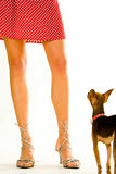 Doggy and its owner Royalty Free Stock Image
