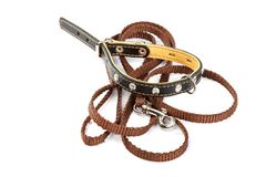 Doggy leather belt collar leash on white background stockfotos
