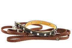Doggy leather belt collar leash on white background stockbilder