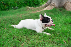 Doggy leisure Royalty Free Stock Photos