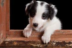Doggy nella finestra immagine stock