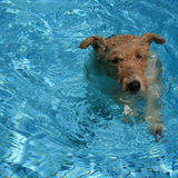 doggy paddle Zdjęcie Royalty Free
