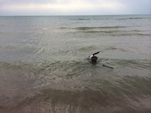 Doggy Paddle Stock Photography