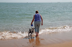 Doggy Paddle Royalty Free Stock Photography