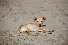 Doggy piacevole Fotografie Stock