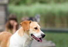 Doggy portrait Stock Photos