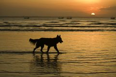 Doggy Silhouette Stock Image