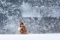 Doggy snow shaker royalty free stock photo