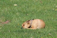 Doggy. Sweet inasent dog sleeping and enjoying the outside Stock Photos
